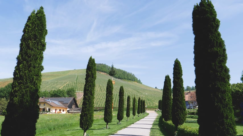toscana : Cypress alley with rural country road in Tuscany like landscape with majestic vineyard hills in Durbach, German Baden-Wurttemberg