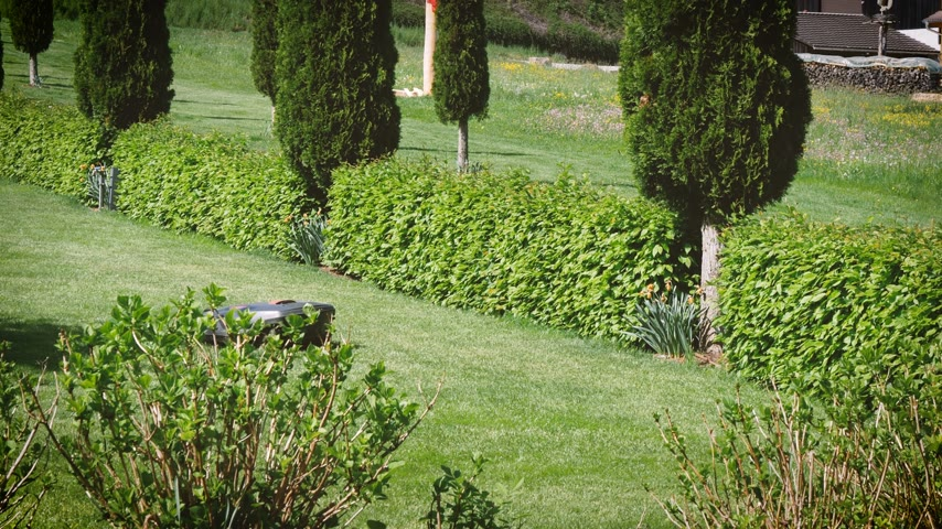 kertészeti : Vintage and modern luxury green garden with working in silence auto mower an mobile smart home controlled autonomous mower