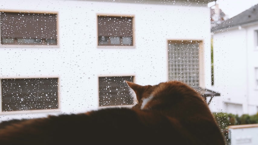 kotki : Cute cat looking through the window covered with rain drops heavy raining outside - warm cozy home atmosphere