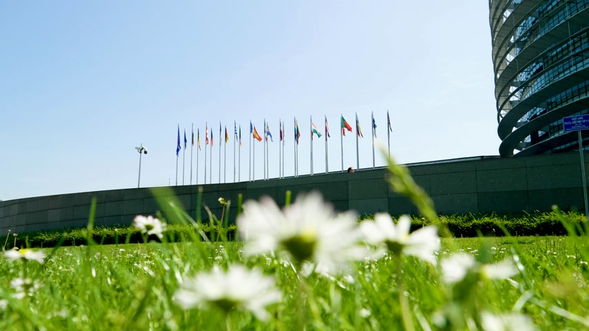all european flags : Low angle view through daisies flower so of calm peaceful waving EU member states flag in front of European Parliament headquarter in Strasbourg a day before 2019 European Parliament election