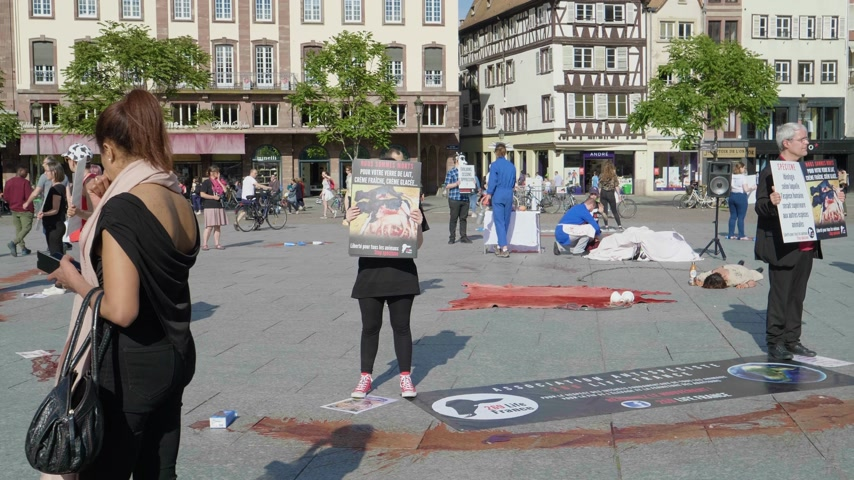 telecí maso : Strasbourg, France - Circa 2019: Vegan protesters from the animal rights organization demonstrate holds vigil for the welfare of cows including visual audio performance Dostupné videozáznamy