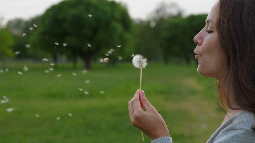 duygusallık : Portrait of woman blow on dandelion, slow motion