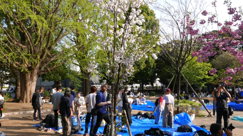 зависать : Young Japanese hang out at hanami cherry blossom festival at Ueno park