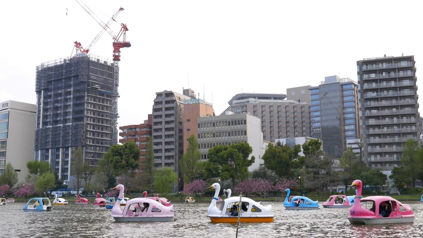 bird family : Famalies boating on swan boats on lake in Tokyo city