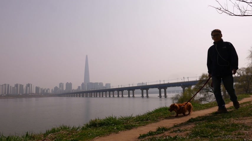 han river : Korean man walk dog in park along Han river, Seoul Panorama