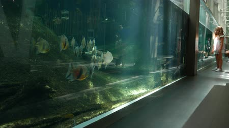 museum : Children look at fish stocks at oceanarium