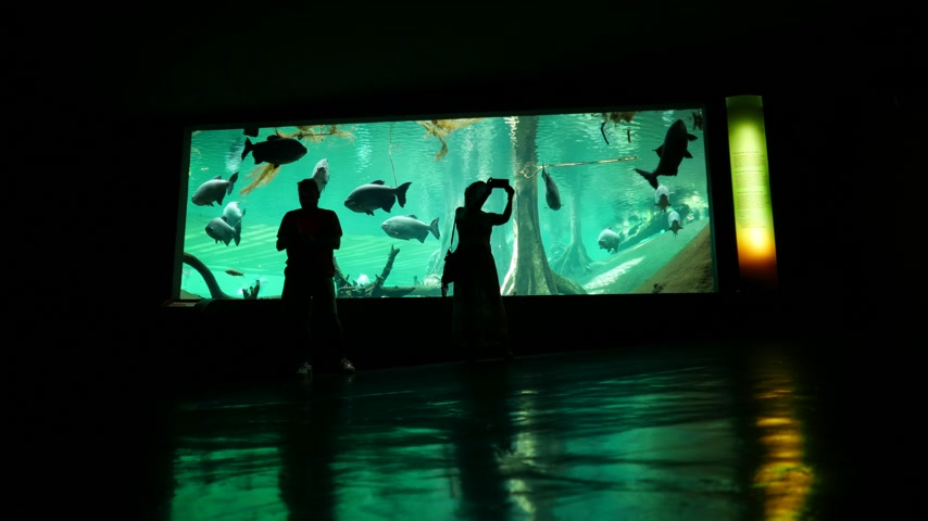 hayran olmak : People make selfie in oceanarium against aquarium glass wall.