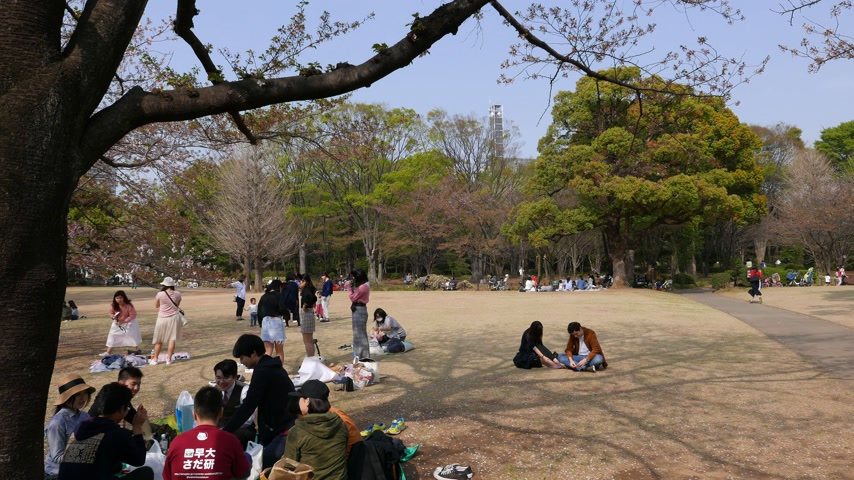 Young japanese people eat and drink in park, Tokyo, Japan Stok Video