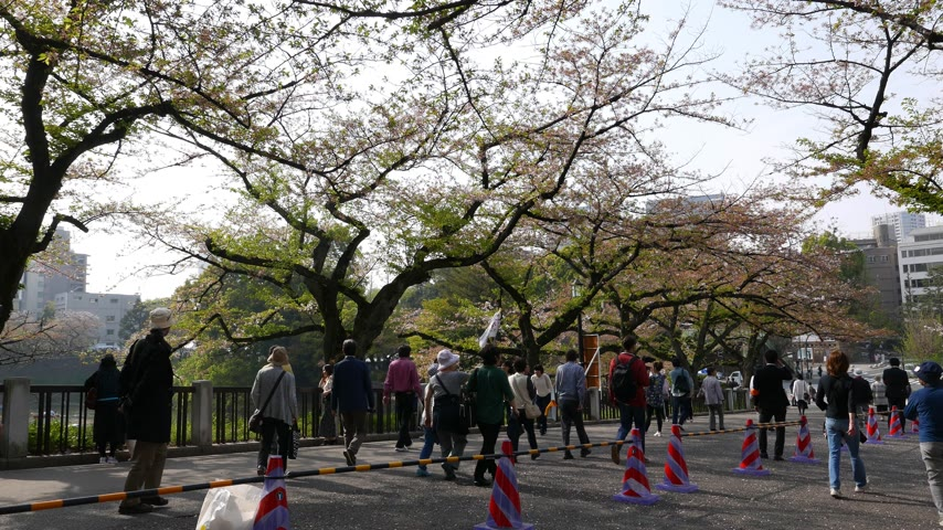 chidorigafuchi : Asian mature tourists walk under cherry blossom trees, Tokyo, Japan Stock Footage