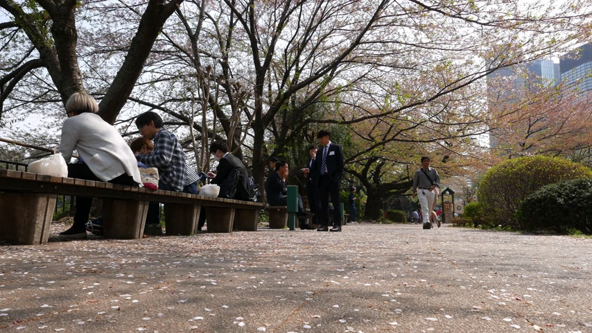 Japanese rest in park and enjoy cherry blossom trees, Tokyo park