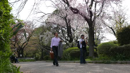 Man take photo of spring blooming cherry trees, Tokyo, Japan