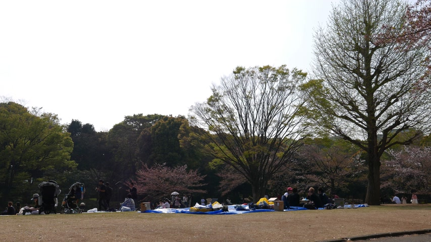 People celebrate spring sakura blooming season sitting in park, Tokyo