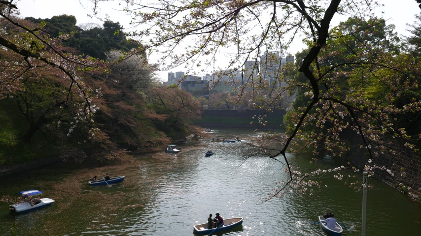 Boating on chidorigafuchi moat in spring in cherry flowers