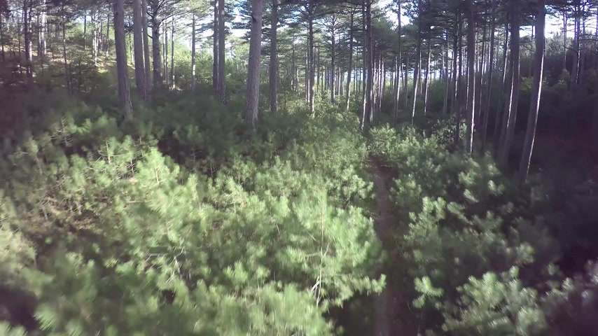 плотный : Aerial View Through the Forest. Flying over the beautiful forest trees. Aerial camera shot. Landscape panorama. Trees, sun rays, light.