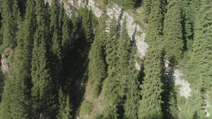 sideways : Green Spruces on Hill Slope. Aerial View. Drone is Flying Sideways and Upward Stock Footage