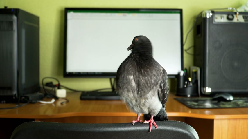 anlamı : pigeon near the computer