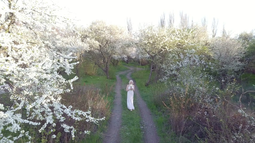 pampeliška : Aerial view. Girl and blooming cherry. The girl is walking in nature lifestyle blossoming garden cherry