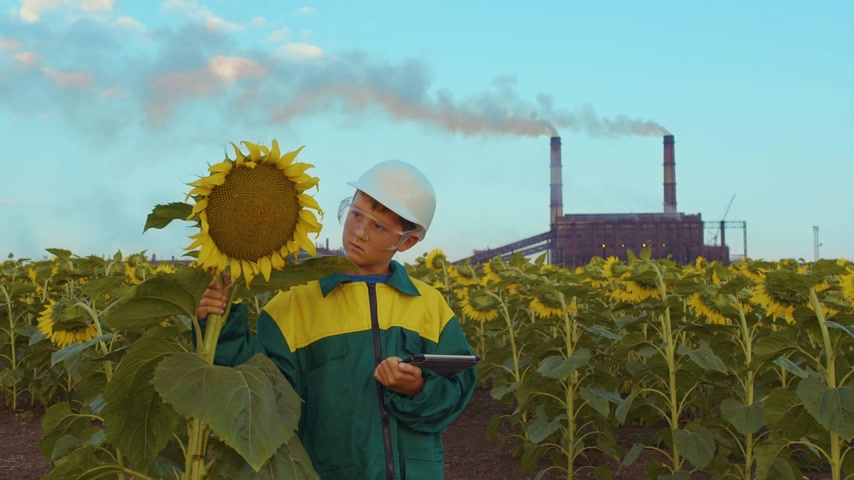 bahçıvan : Close up boy agronomist with the tablet PC on sunflowers field at sunset. Stok Video