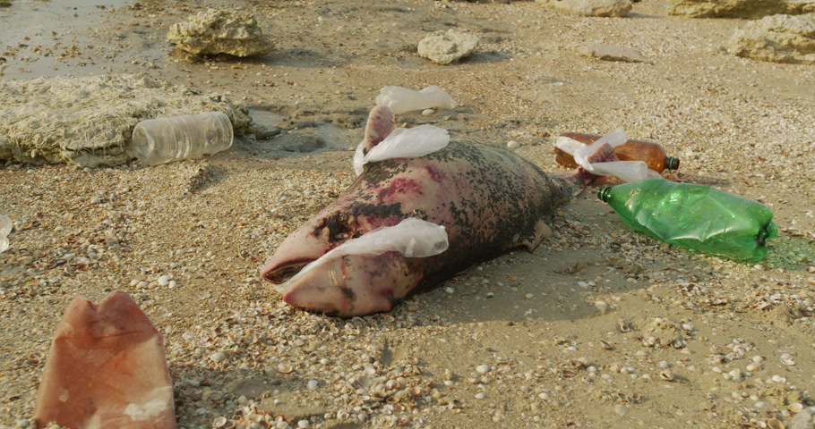lijk : Dead dolphin. Ecological catastrophes become visible throughout the earth millions of marine animals die due to poisoning of plastic garbage and human waste due to an environmental disaster.