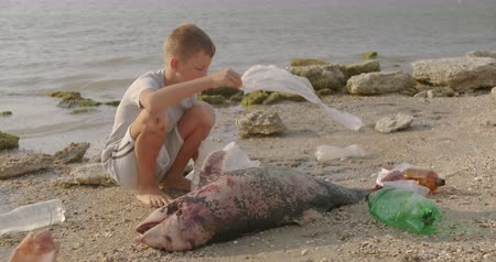 lijk : A little boy removes plastic bags from a dead dolphin lying on the beach. Environmental disaster concept. Stockvideo