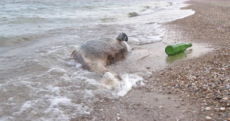 lijk : Dead dolphin at Polluted Waters . Sea pollution toxic plastic garbage.