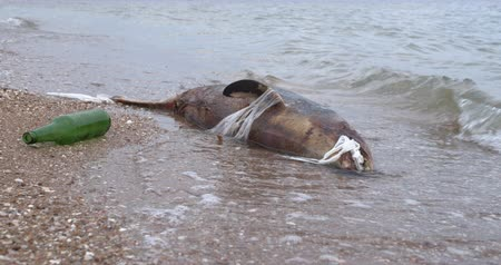 matança : Dead young dolphin on the sea shore. Earth wildlife, environmental pollution, ecological catastrophe. Dead animal.