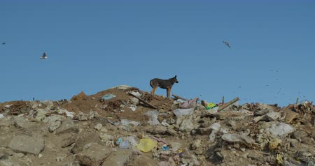 apocalyptic : Stray dog. Mountains of garbage. City dump.
