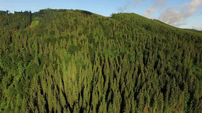 Aerial footage over the north european forest.