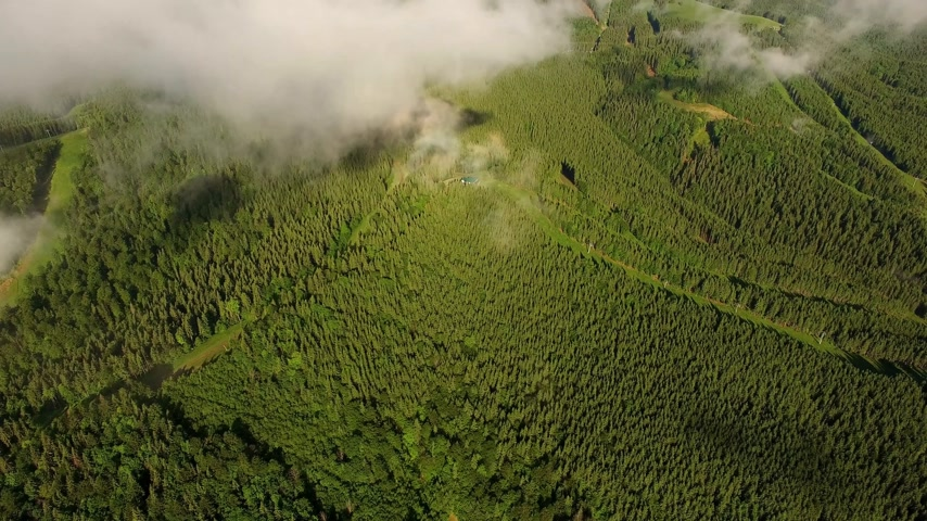 Incredible drone aerial camera lifting from forest to horizon. European forest