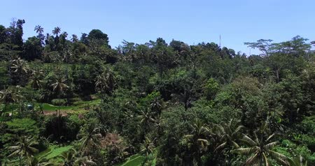 Аerial view over the trees and palms forest in the jungle