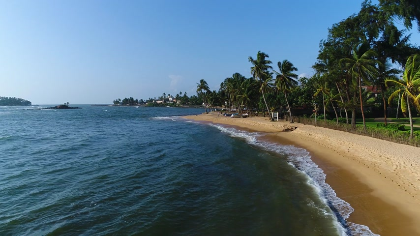 Aerial of sandy beach with palm trees, which is washed by sea on a sunny day in Sri Lanka Stock Footage