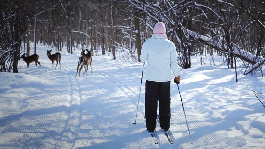 norvégia : Woman Cross-Country Skiing With Deers in Wild Nature