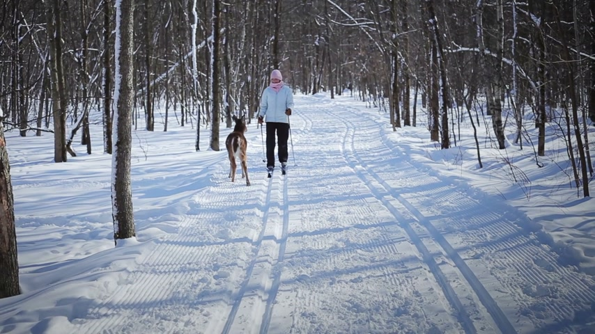 kanada : Woman Cross-Country Skiing With Deers in Wild Nature