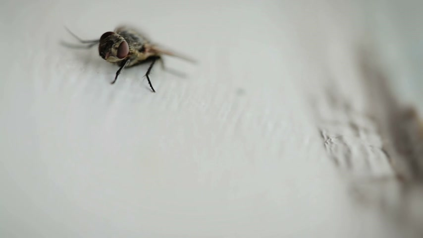 tlapky : Nasty Housefly Indoor on a Window Pane