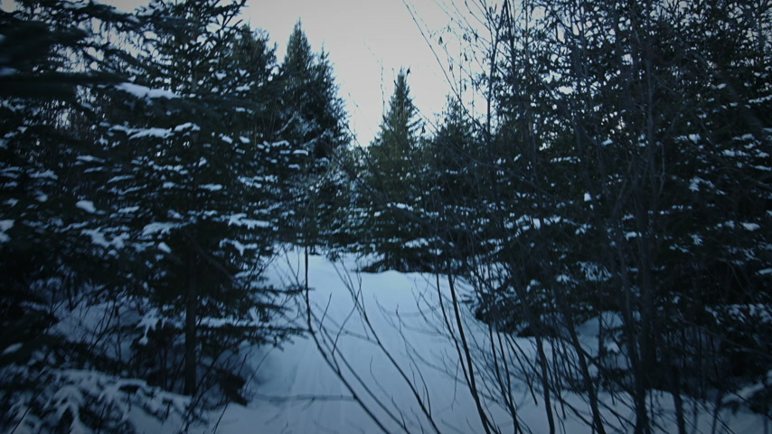 bétula : Handheld Footage of Someone Walking in Forest in Winter just Before the Night when the light is getting Blue