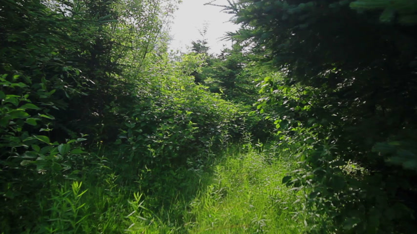 natura : Personal Point of View (POV) of someone walking in forest during Summer