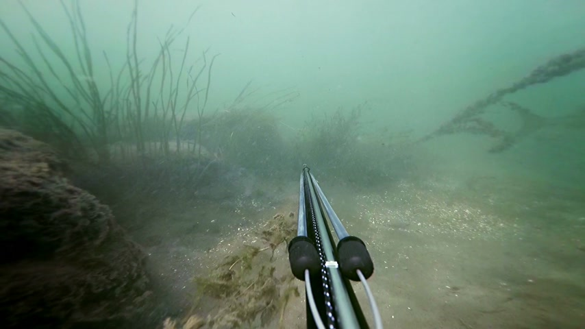 spear gun : Freediver Spear Fishing and Seeing a Big fish, but did not shoot.