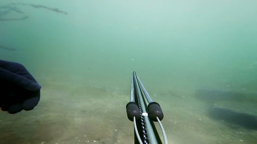 ploutve : Freediver Spear Fishing and Looking at the the fishes then shoot one for the dinner