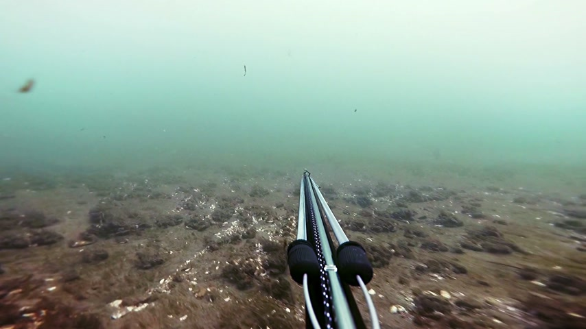 ток : Freediver Spear Fishing and Looking at the the fishes then shoot one for the dinner
