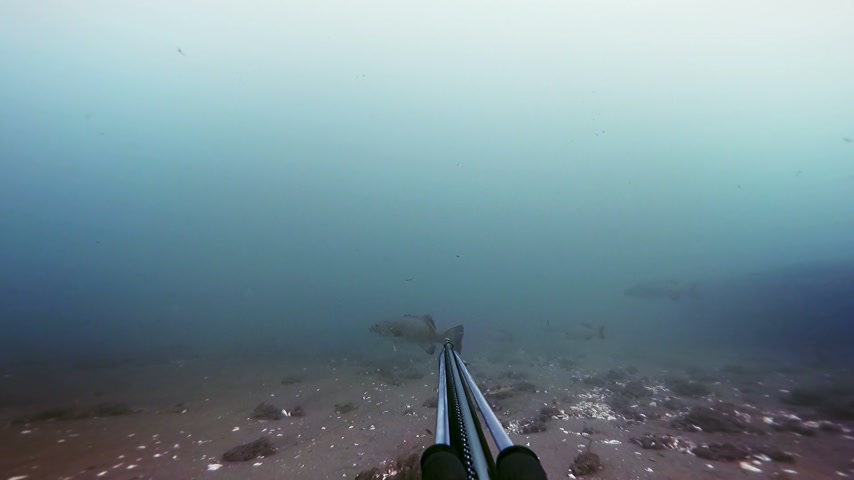 spear gun : Freediver Spear Fishing and Looking at the the fishes then shoot one for the dinner