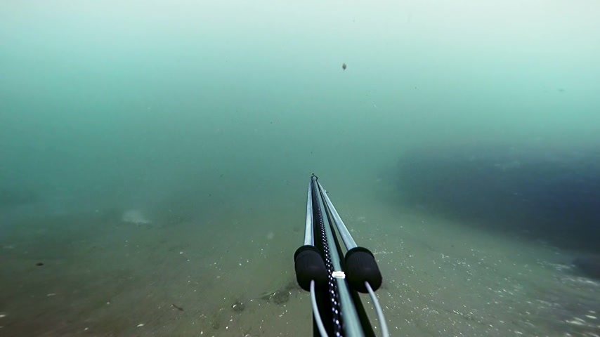 spear gun : Freediver Spear Fishing and Looking at the the fishes, but do not shoot