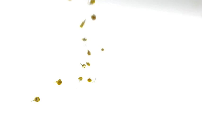 százszorszép : Super Slow Motion Chamomile Tea Falling on White Background Stock mozgókép