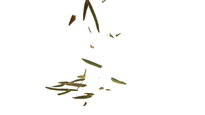 herbal : Super Slow Motion Labrador tea Falling on White Background