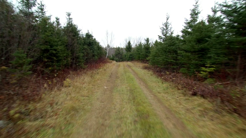 pegadas : Timelapse of Front POV View from a Vehicle on a Dirt Road Through the Forest