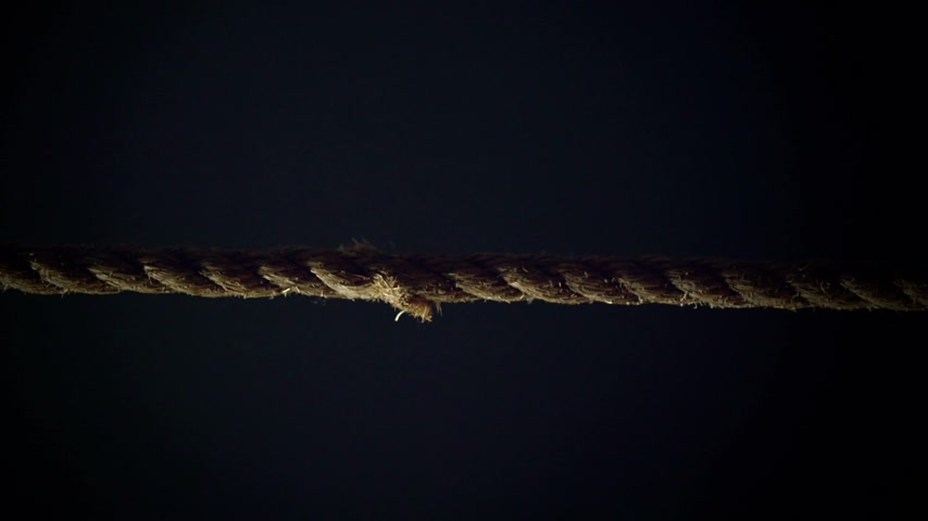 esneme : Tension of a Panic Attack Illustrated with Breaking Rope in Super Slow Motion Stok Video