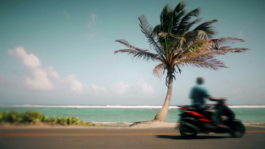 motorkerékpár : Motion-Photo Cinemagraph of a Palm Tree Symbol of Vacation and a blurry Motorcycle Stock mozgókép