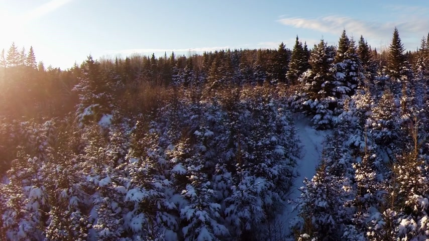 erdészet : Aerial Video of Small and Mature Spruce and Pine Plantation - Forestry and Forest Industry Footage. Stock mozgókép