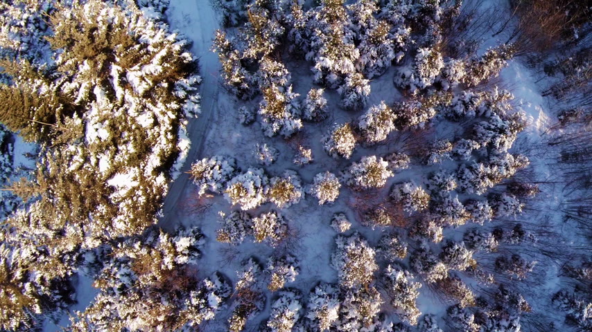 silvicultura : Aerial Video of Small and Mature Spruce and Pine Plantation - Forestry and Forest Industry Footage. Stock Footage