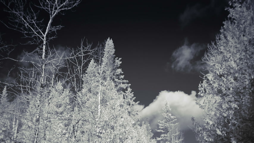 Infrared Tripod Video or Rural Forest Nature Landscape during Winter