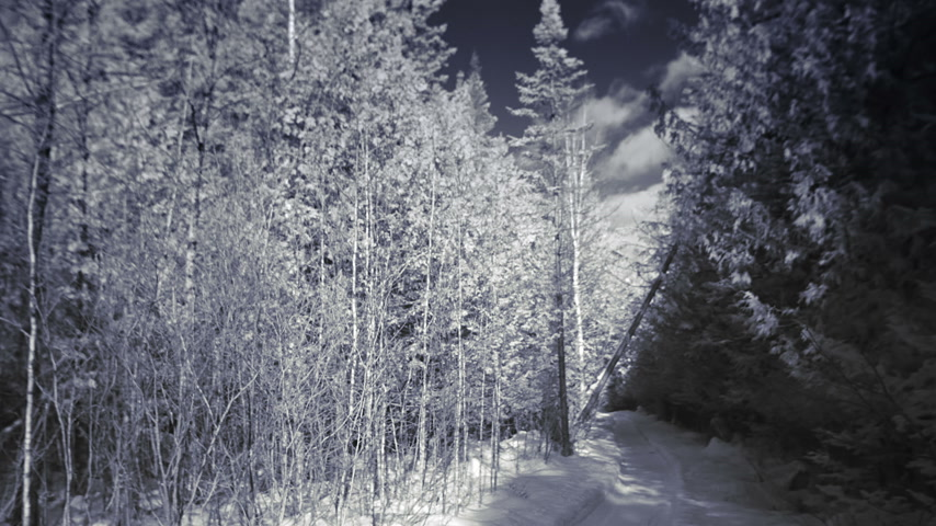 Infrared Panning Video or Rural Forest Nature Landscape during Winter Stock Footage